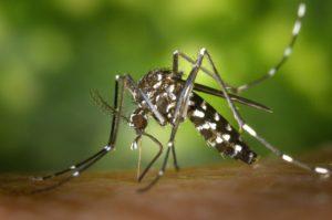 Jak se chránit proti hmyzu? Navíc recept na přírodní repelent.