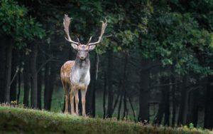 MZe vydalo novou vyhlášku o prodloužení doby lovu spárkaté zvěře.