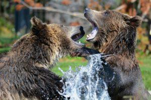 Jak se připravit na napadení medvědem? A jak mu předejít?